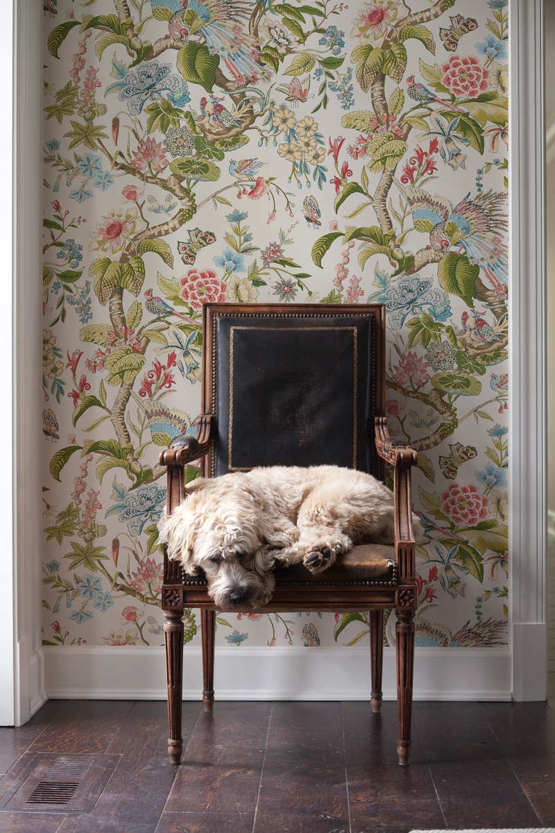 The Signature Collection From Schumacher